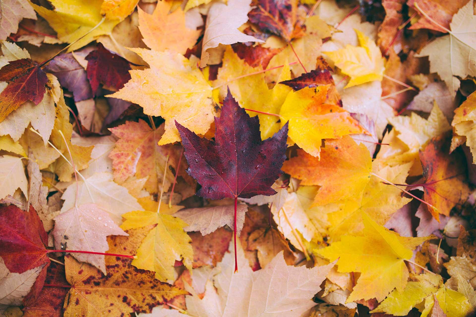 leaves-1920-1280